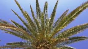 Vista inferior da palmeira exótica verde contra o céu azul com fundo do sol filme