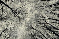 Vista inferior das árvores na floresta atrasada do outono Imagens de Stock Royalty Free