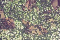 Vista inferior de hojas Fotos de archivo