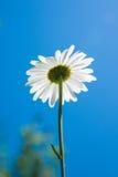 Vista inferior de la flor con el fondo del cielo azul Foto de archivo