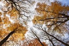 Vista inferior de las frondas del árbol foto de archivo libre de regalías