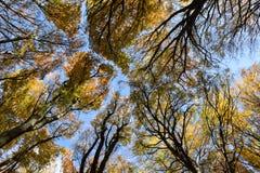 Vista inferior de las hojas de la haya fotografía de archivo