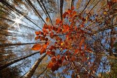 Vista inferior de los árboles del otoño Foto de archivo