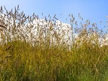 vista inferior de los vidrios verdes del prado Foto de archivo libre de regalías