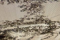 Vista inferior de silhuetas da barraca e das plantas fotografia de stock royalty free