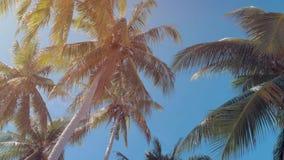 Vista inferior del bosque de las palmeras del coco en sol Palmeras contra un cielo azul hermoso Palmeras verdes en azul almacen de video