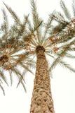 Vista inferior na palma exótica e no céu azul imagens de stock royalty free