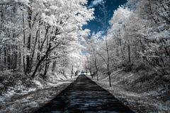 Vista infravermelha das árvores ao longo de uma estrada sob céus azuis com branco imagem de stock