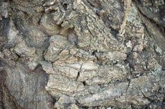 Vista interessante della corteccia di vecchio albero Fotografie Stock