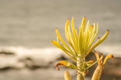 Vista interessante sopra la spiaggia da Tenerife con una fine sulla pianta fotografia stock