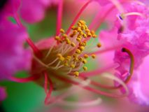 Vista interna de uma flor pequena Imagem de Stock Royalty Free