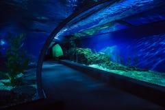 Vista interna do túnel de Oceanarium imagem de stock royalty free