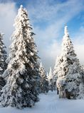 Madeira nevado em montanhas Imagem de Stock Royalty Free