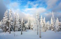 Madeira nevado em montanhas Foto de Stock