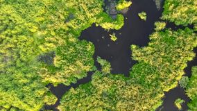 vista 4K aérea de um barco da velocidade que move-se através dos canais da lagoa do pântano video estoque