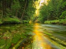Vista a la corriente de la montaña debajo de árboles verdes frescos El nivel del agua hace reflexiones verdes Finales del verano Fotografía de archivo