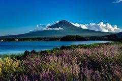 Vista a la lavanda del monte Fuji en verano con el cielo azul y las nubes w fotos de archivo