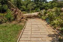 Vista larga do jardim verde com grama, árvores, plantas, madeiras cortadas da árvore e caminho, Chennai, Tamil Nadu, Índia, o 29  Imagem de Stock