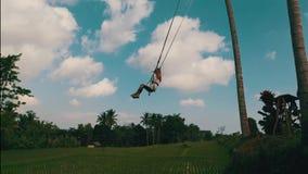 Vista lateral aérea de la mujer en el balanceo sobre fondo hermoso de los campos del arroz almacen de video