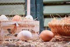 Vista lateral de huevos con el cartón de huevos Fotos de archivo libres de regalías