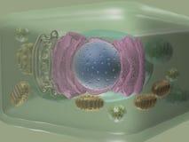 Vista lateral de la célula de la planta Foto de archivo