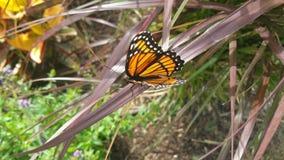 Vista lateral de la mariposa de monarca fotografía de archivo