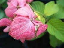 Vista lateral de las gotas de lluvia en Dona Training Pink Flowers Imágenes de archivo libres de regalías