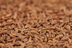 Vista lateral de sementes de cominhos Imagens de Stock Royalty Free
