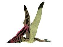 Vista lateral de Thalassodromeus Pterosaur Imagen de archivo libre de regalías
