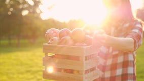 Vista lateral de uma jovem positiva segurando uma caixa de madeira com maçãs vermelhas suculentas filme