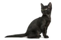 Vista lateral de una sentada negra del gatito, mirando detrás, 2 meses Fotografía de archivo