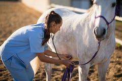 Vista lateral del caballo de comprobación veterinario femenino foto de archivo libre de regalías