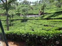 Vista lateral del camino de la hoja del árbol del jardín de té Foto de archivo