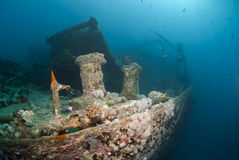 Vista lateral del naufragio SS Thistlegorm. Foto de archivo