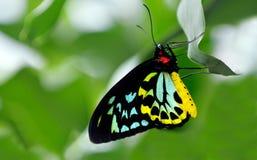 Vista lateral del perfil de Birdwing de los mojones Foto de archivo libre de regalías