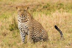 Vista lateral del primer del leopardo Fotos de archivo
