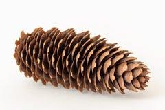Vista lateral del solo cono grande del pino Foto de archivo
