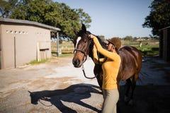 Vista lateral do freio fêmea da asseguração do jóquei no cavalo fotos de stock royalty free