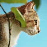 VISTA LATERAL DO OLHO DE CAT BONITO imagens de stock royalty free