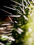 Vista lateral do tronco de árvore com ponto Pointy afiado fotos de stock