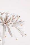 Vista lateral parcial del crisantemo Fotografía de archivo