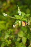 Vista laterale dei fiori e della farfalla Fotografia Stock
