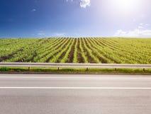 Vista laterale dei raccolti vuoti della strada asfaltata e del cereale Immagini Stock