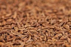 Vista laterale dei semi di cumino Immagini Stock Libere da Diritti