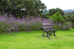 Vista laterale del banco in giardino Immagine Stock