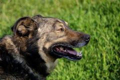 Vista laterale del cane Immagini Stock Libere da Diritti