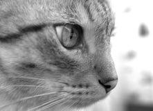 Vista laterale del fronte del gatto Immagine Stock