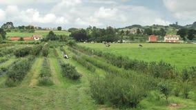 vista laterale del paese di 4 K dei campi verdi asturiani, delle colline piantate accoglienti, chalet, case di campagna, giardino video d archivio