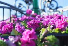 Vista laterale del primo piano dei fiori con bokeh a forma di artistico nella b Fotografie Stock Libere da Diritti