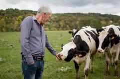 Vista laterale dell'agricoltore senior che esamina fiero le sue mucche in bianco e nero nella campagna all'aperto Immagini Stock Libere da Diritti